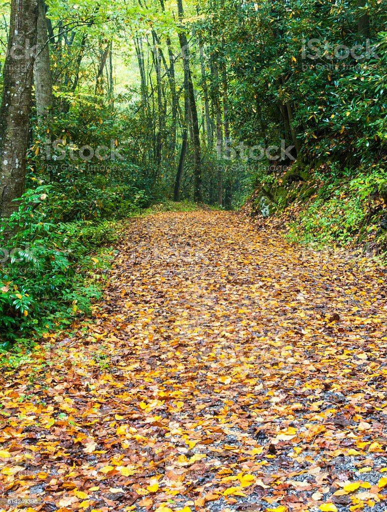 Fall Leaves on Trail stock photo