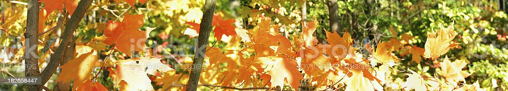 Fall Leaves Panorama royalty-free stock photo