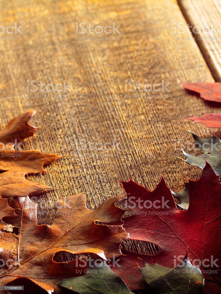 Herbst Blätter – Foto
