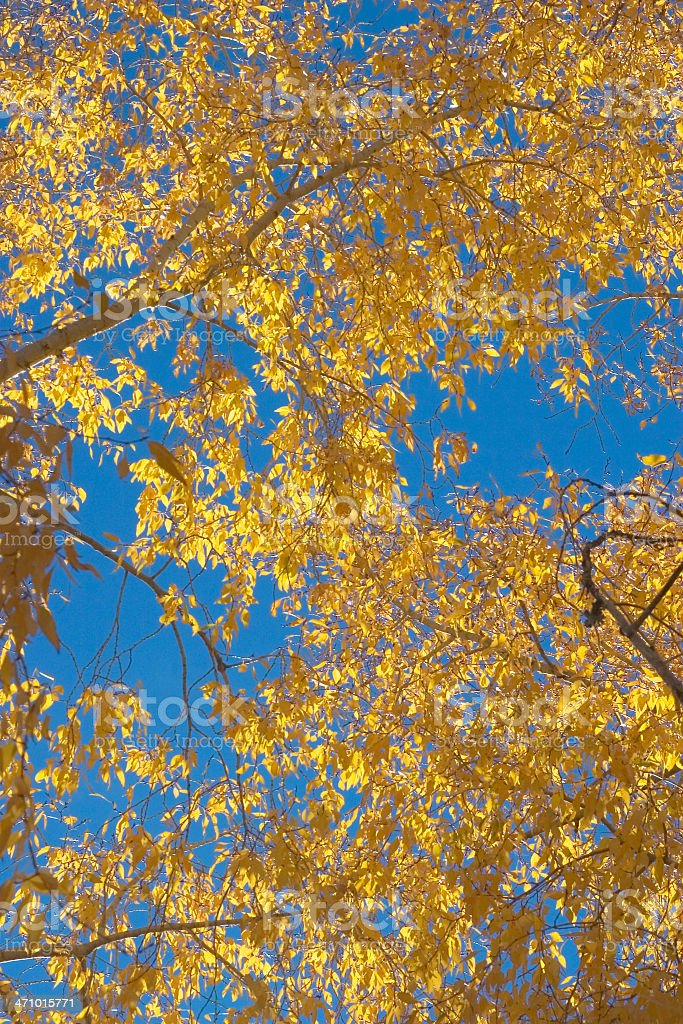 Fall Leaves & Sky royalty-free stock photo