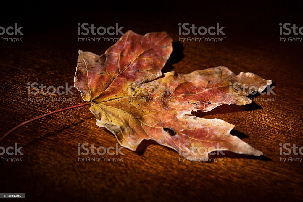 Fall Maple Leaf on Wooden Table stock photo