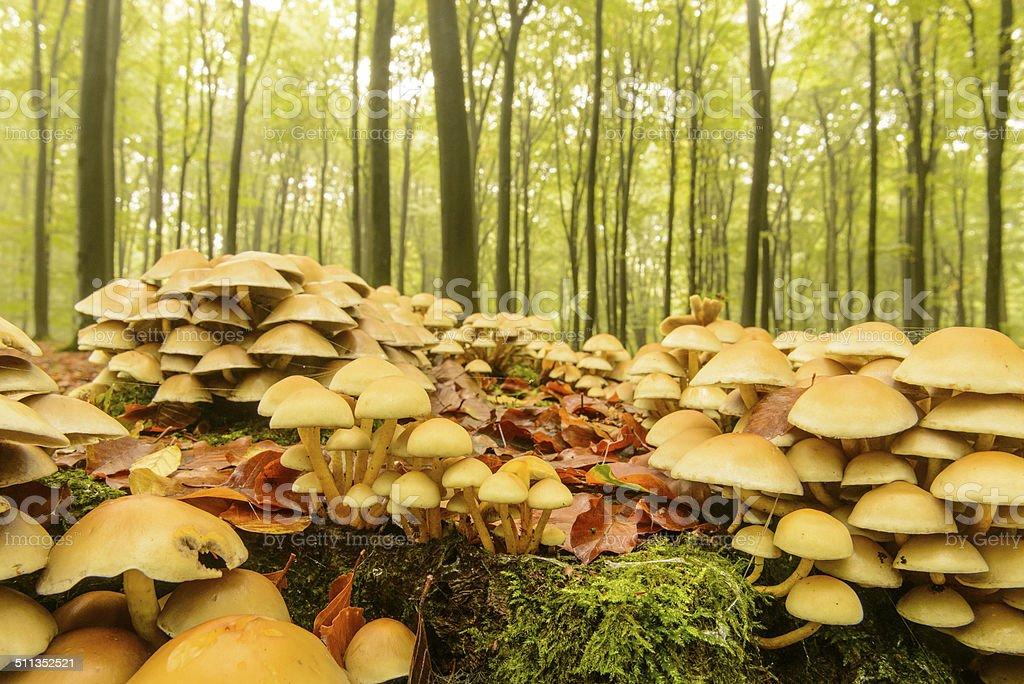 Fall mushrooms stock photo