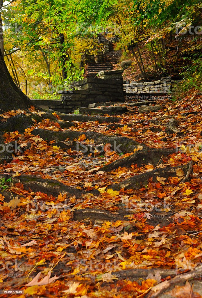 Fall of the leaf in forest stock photo
