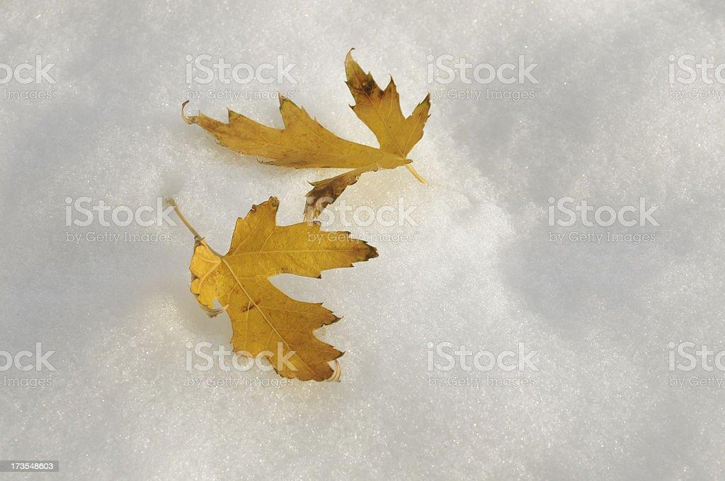 Fall on Snow stock photo