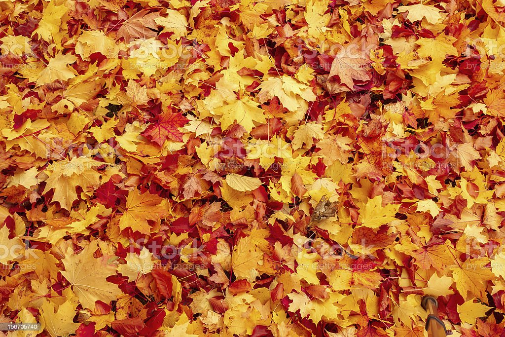 Fall orange and red autumn leaves on ground royalty-free stock photo