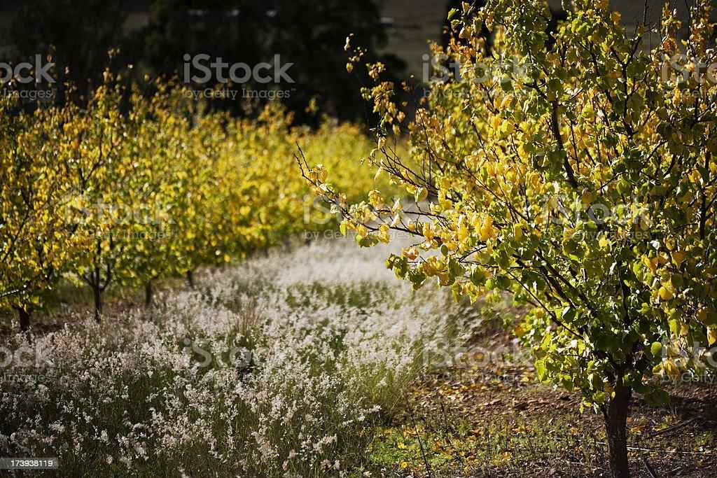 Fall Orchard stock photo