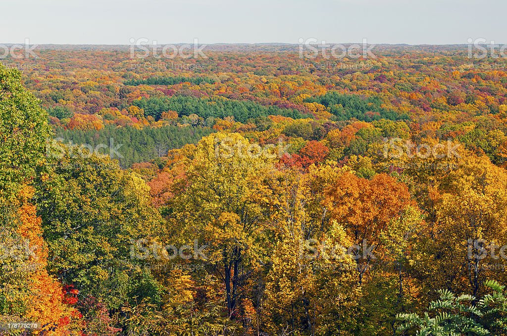 Fall Panorama in a Midwest Forest stock photo