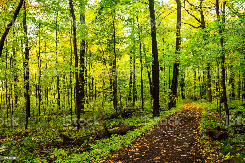 Fall Path 1 stock photo