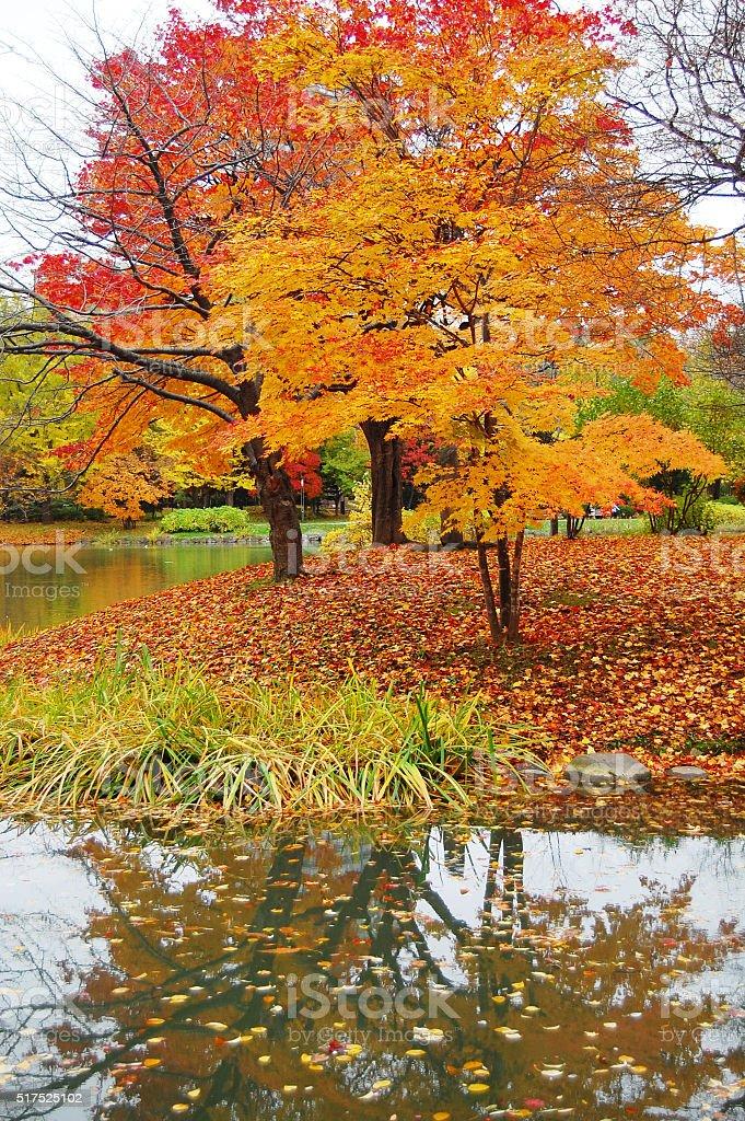 fall stock photo
