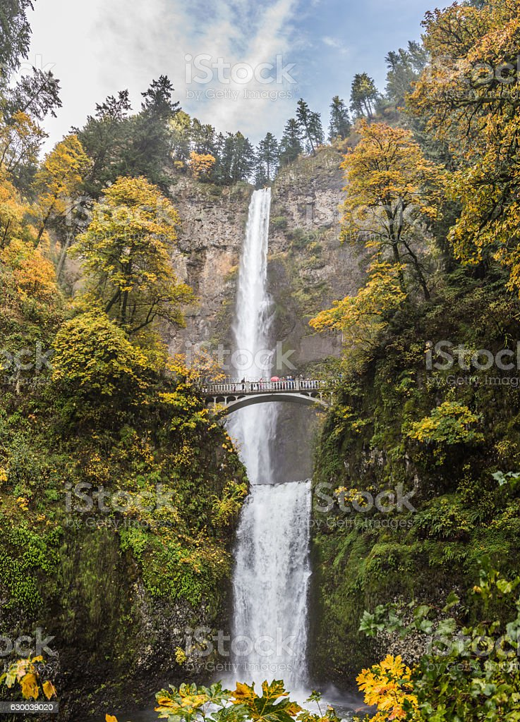 Fall stock photo