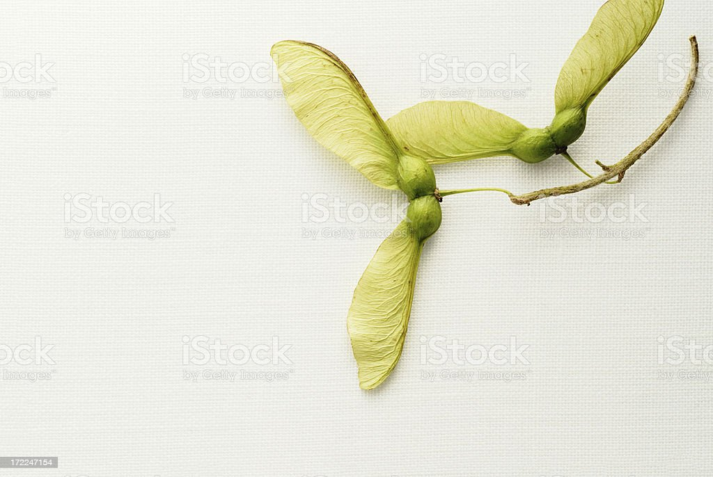 Fall propellers stock photo