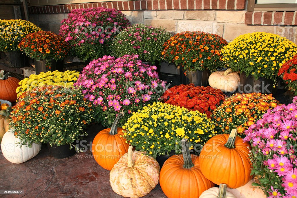 Fall pumpkins and flowers stock photo