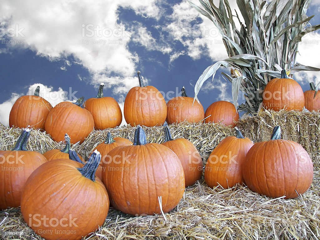 fall pumpkins royalty-free stock photo