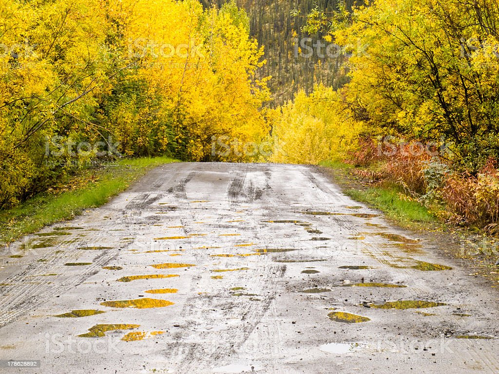 Fall rain on rural dirt road thru yellow willows royalty-free stock photo