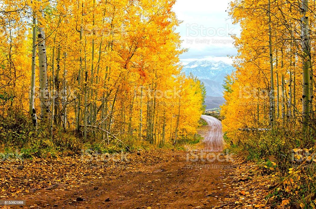 Fall Road  photo libre de droits