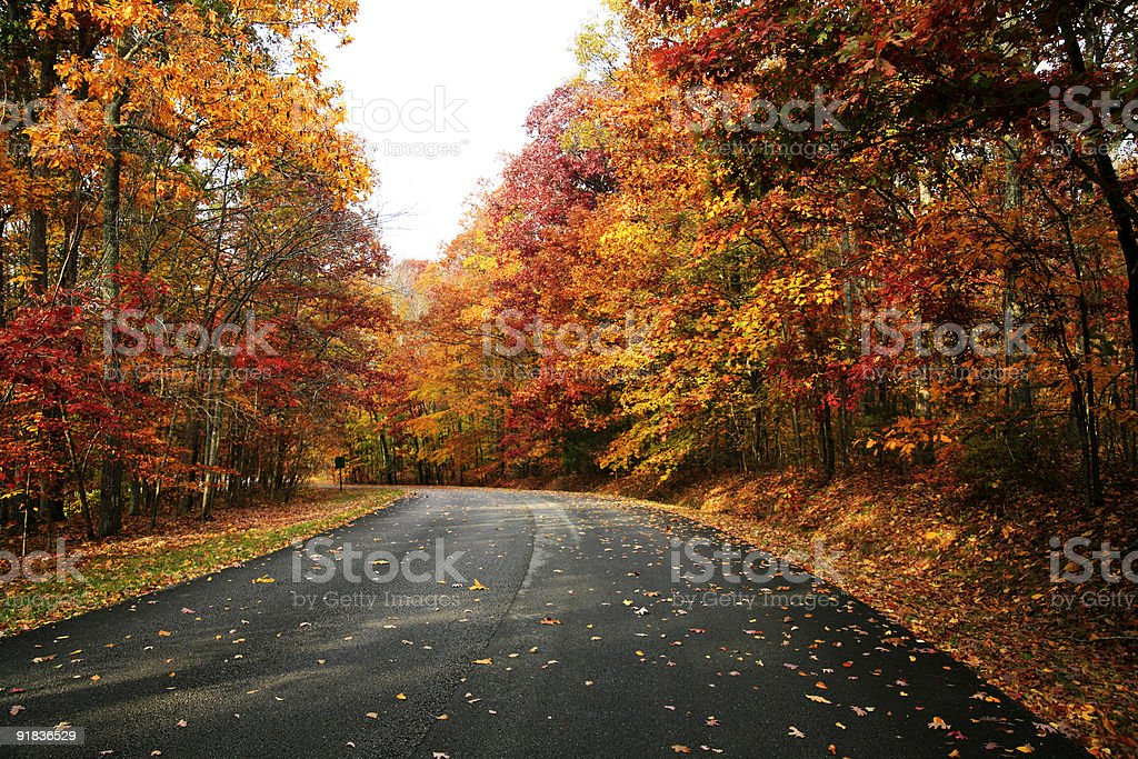 Fall Road royalty-free stock photo