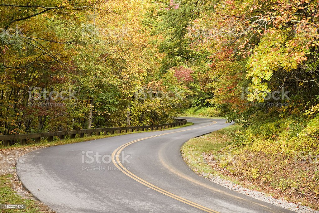 Fall Road through the Forest royalty-free stock photo
