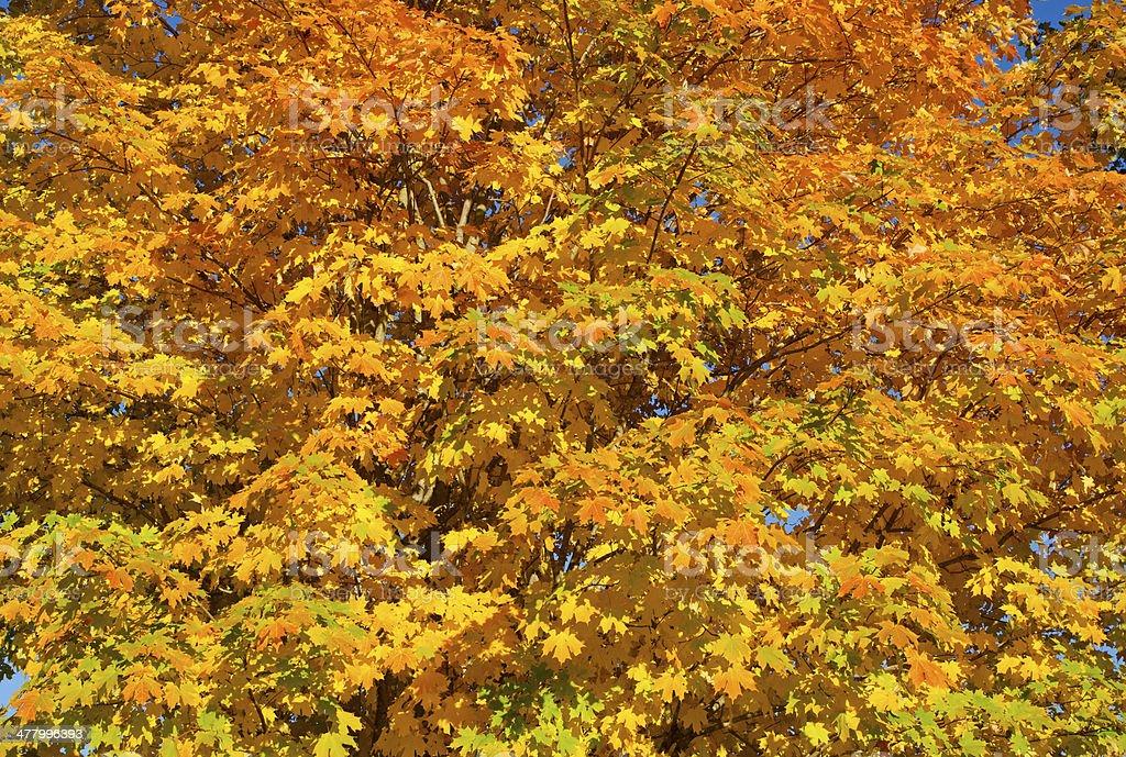 Fall Scene Background royalty-free stock photo