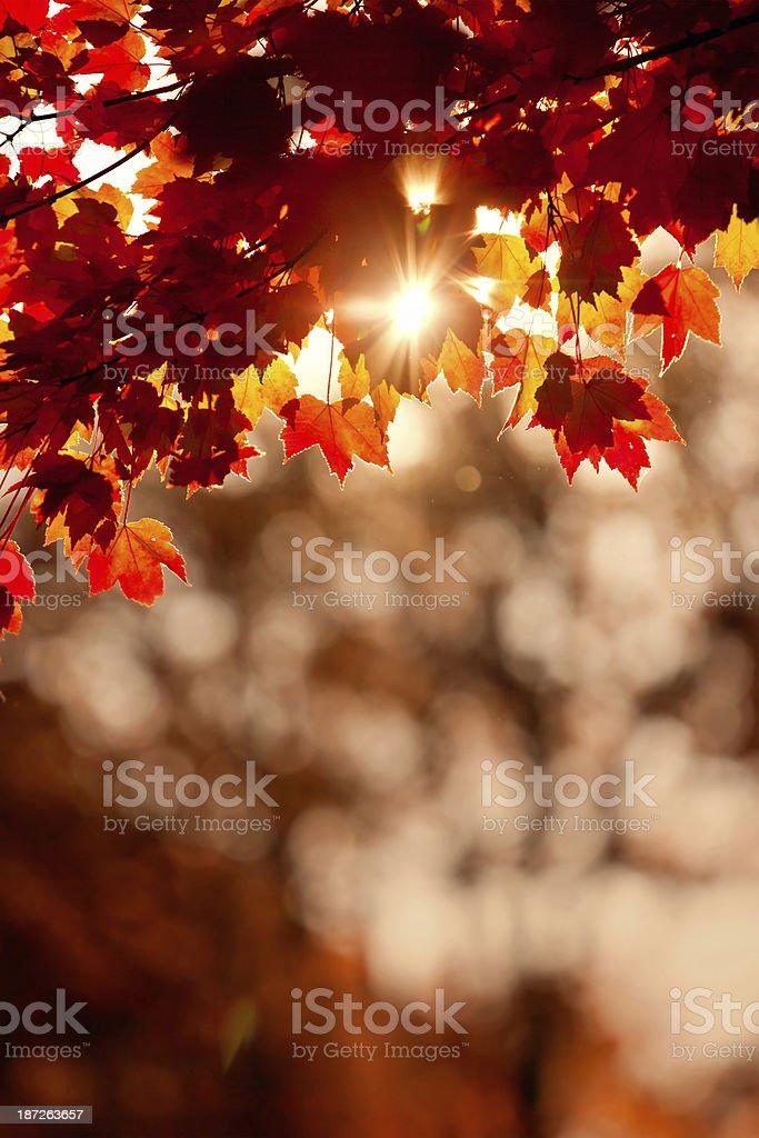 Fall Scenics stock photo