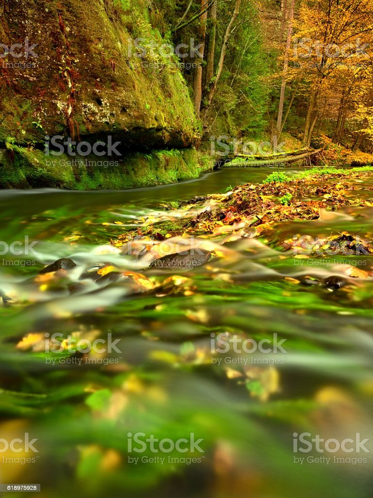 Fall season at river. Green  water, colorful autumn  leaves. stock photo