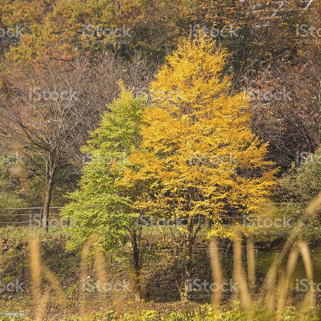 Fall season at Shirakawa-go. Japan stock photo