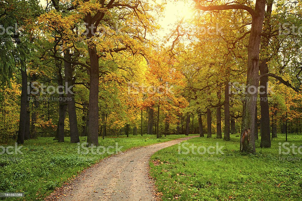 fall season in park with pathway royalty-free stock photo
