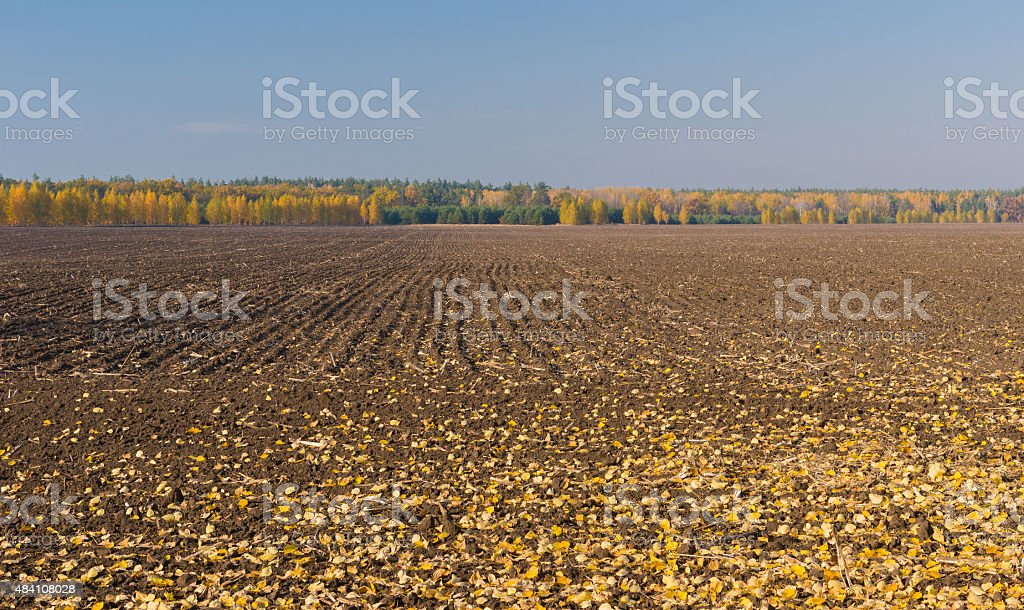 Fall season on agricultural fields stock photo