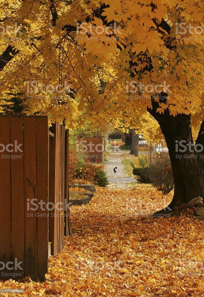 fall sidewalk royalty-free stock photo