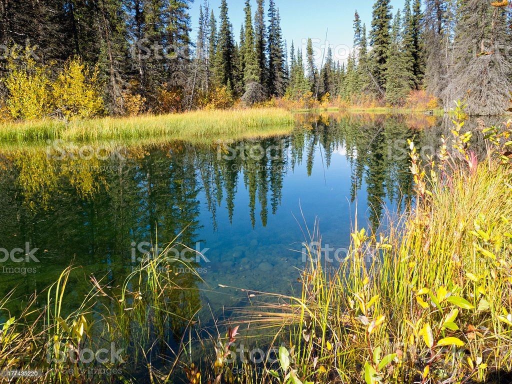 Fall sky mirrored on calm clear taiga wetland pond royalty-free stock photo