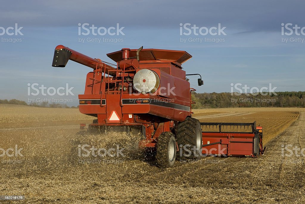 Fall Soybean Harvesting with a Large Red Combine stock photo