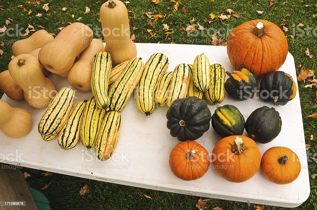 Fall Squash Assortment royalty-free stock photo