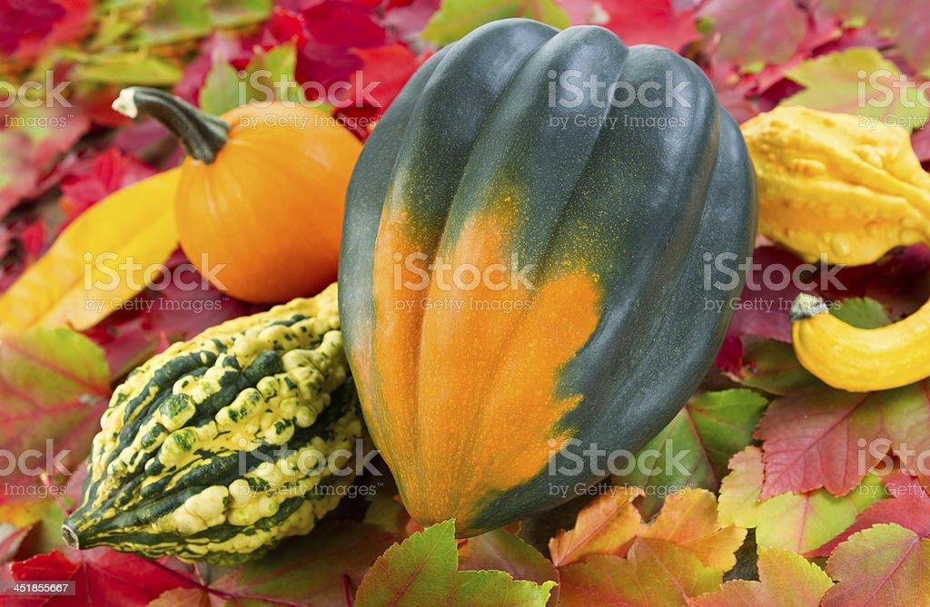 Fall Squash royalty-free stock photo