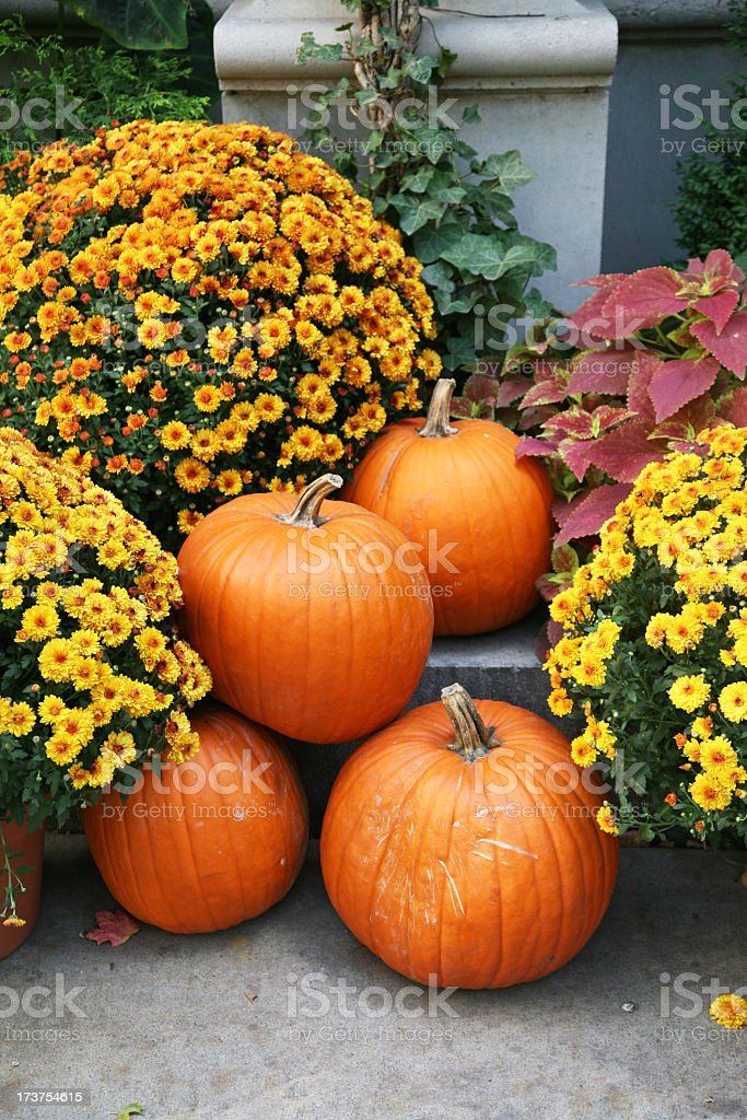 Fall still life with orange pumpkins and yellow perennials stock photo