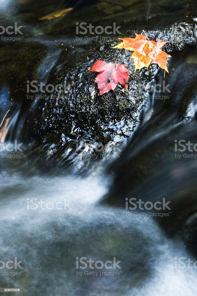 Fall Stream royalty-free stock photo