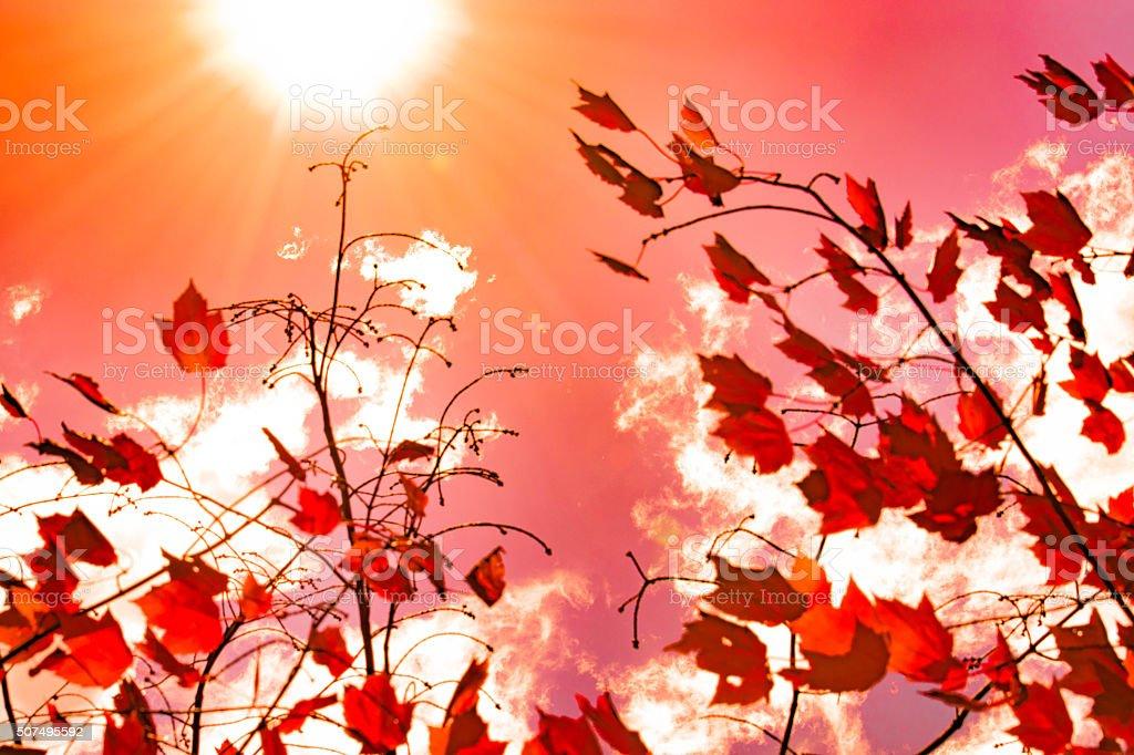 Fall Sun royalty-free stock photo