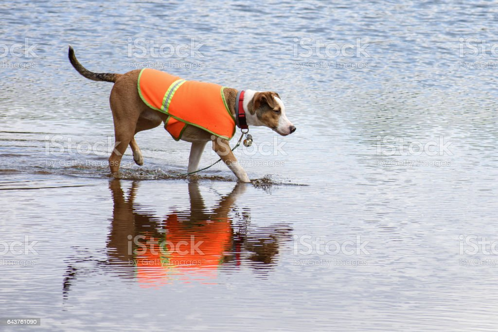 Fall Swim Dog stock photo