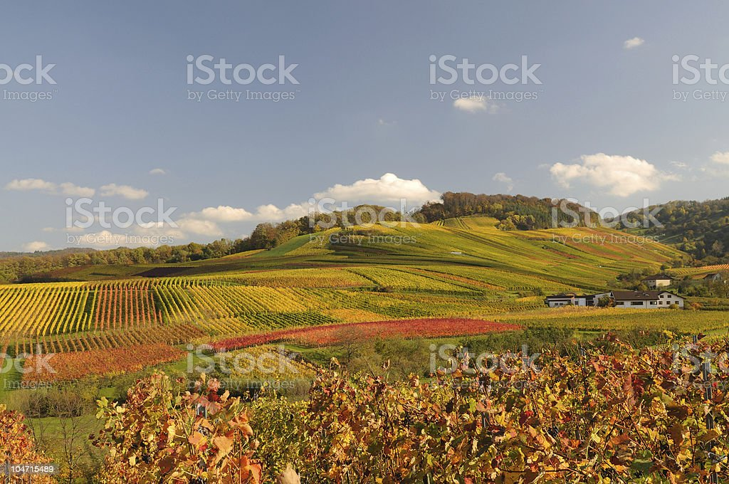 Fall Time in Germany Vineyards stock photo