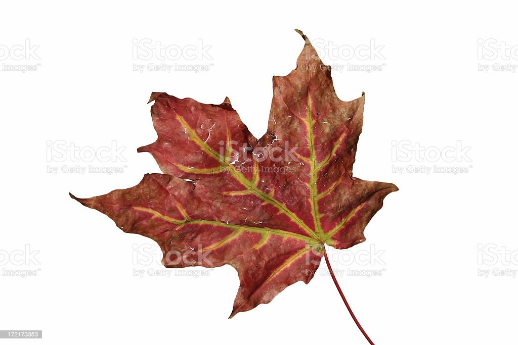 Fall Transitions royalty-free stock photo