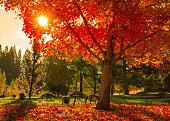 Fall tree background