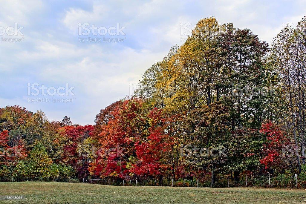 Albero autunno Line foto stock royalty-free