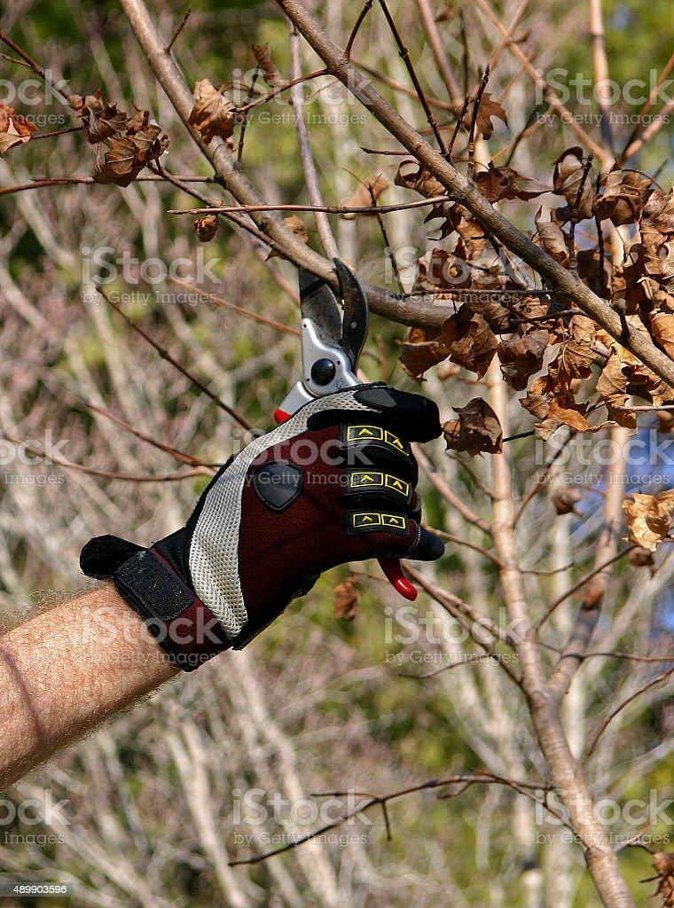 Fall Tree Pruning stock photo