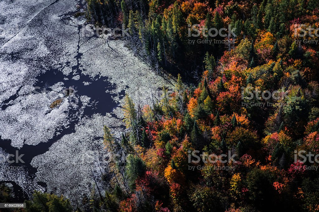 Fall trees in Canadian Parks - Algonquin Park - Ontario stock photo