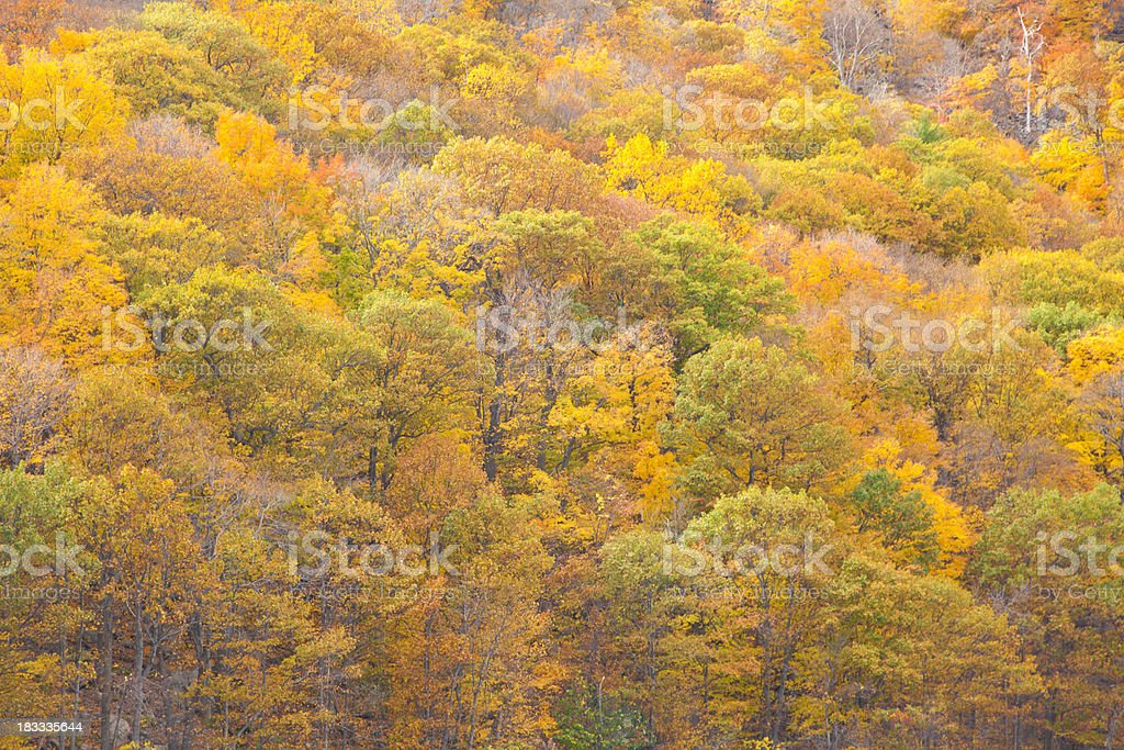 Fall Trees With Bright Colors royalty-free stock photo