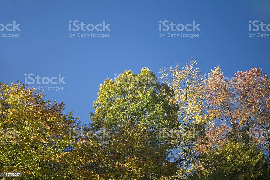 Fall Treetops stock photo
