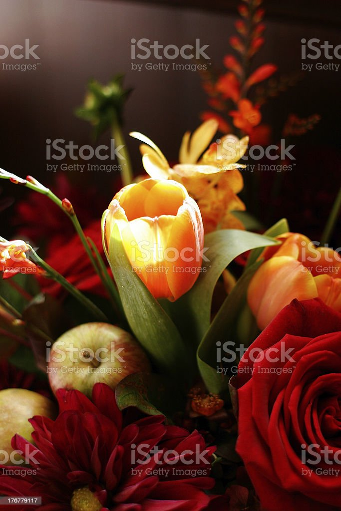 Fall tulips, thanksgiving colors royalty-free stock photo