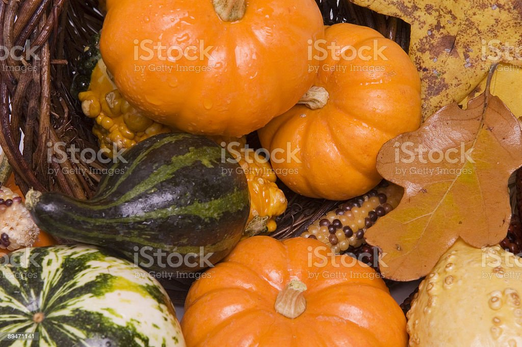 Fall vegetables stock photo