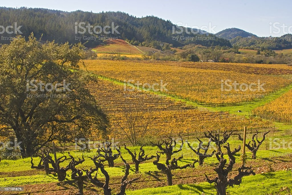 Fall Vineyard in Dry Creek Valley, Sonoma County CA stock photo