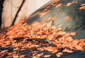 fall windshield covered with fallen leafs