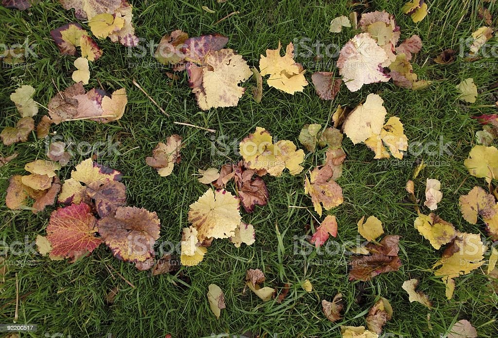 fall with coloured leaves royalty-free stock photo