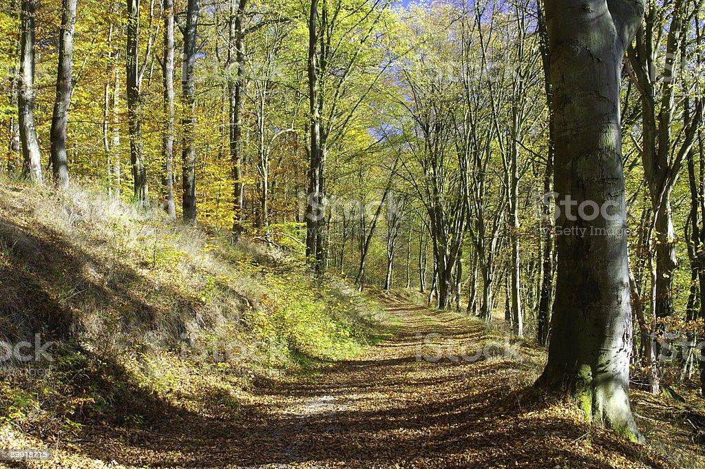 Fall woodland path 1 stock photo